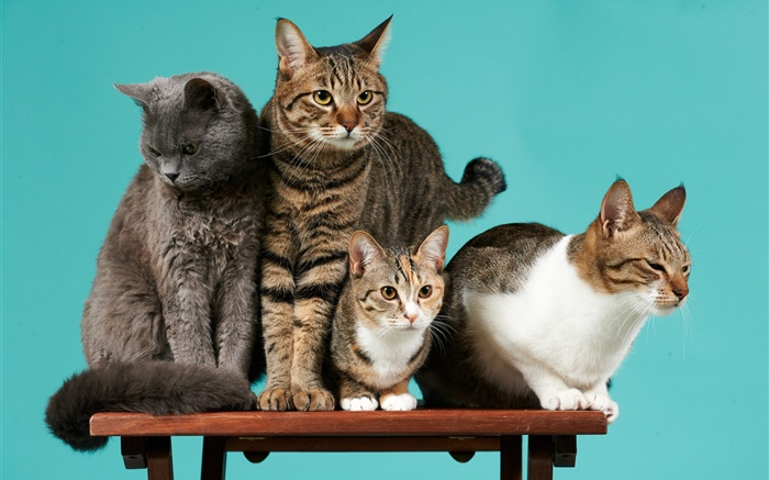 Four cats, green background Wallpapers Pictures Photos Images