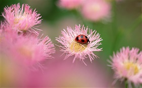 Ladybug with pink flowers HD wallpaper