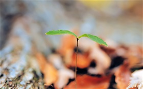 Leaves, saplings sprout HD wallpaper