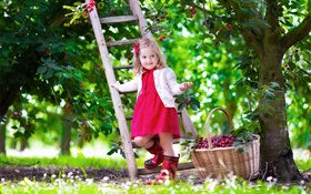 Little girl picking cherries, child, tree, garden HD wallpaper