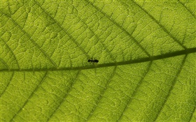 Macro leaves, ants HD wallpaper