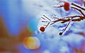 Red berries, twigs, winter, bokeh HD wallpaper