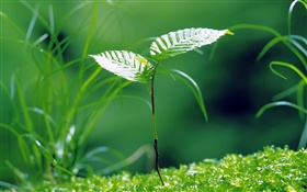 Saplings sprouting, spring, grass HD wallpaper