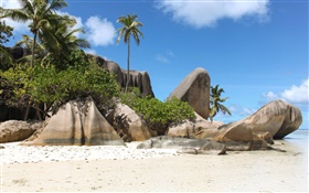 Seychelles Island, beach, stones, palm trees HD wallpaper