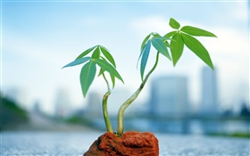 Small bonsai, background blur HD wallpaper