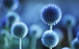 Spherical flowers, blue style HD wallpaper