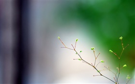 Spring, twigs, buds, bokeh HD wallpaper