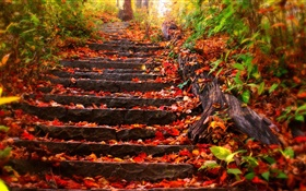 Stone stairs, red leaves, autumn HD wallpaper