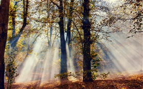 Sun rays, forest, trees, autumn HD wallpaper
