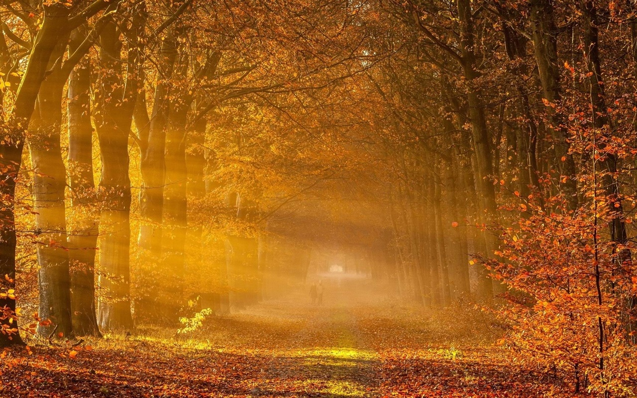 Trees, red leaves, road, people, sunlight, autumn 1280x800 wallpaper