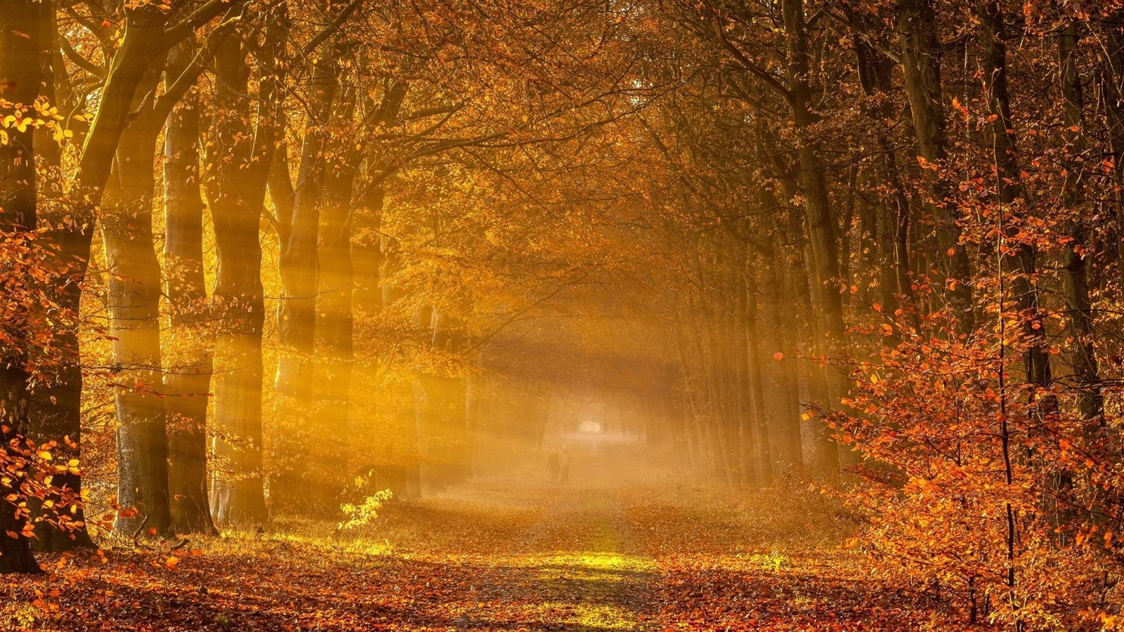 Trees, red leaves, road, people, sunlight, autumn 1600x900 wallpaper