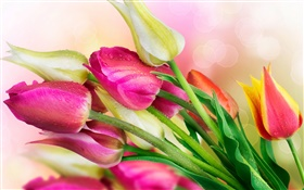 Tulips flowers, water droplets HD wallpaper
