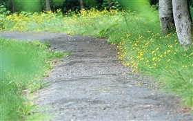 Yellow wildflowers, path, blurry HD wallpaper