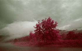 Lake, fog, trees, red leaves, autumn