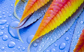 Leaf with water drops HD wallpaper