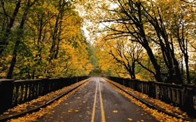 Road, trees, yellow leaves, autumn HD wallpaper