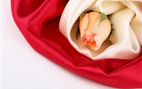 Rose flower, silk HD wallpaper