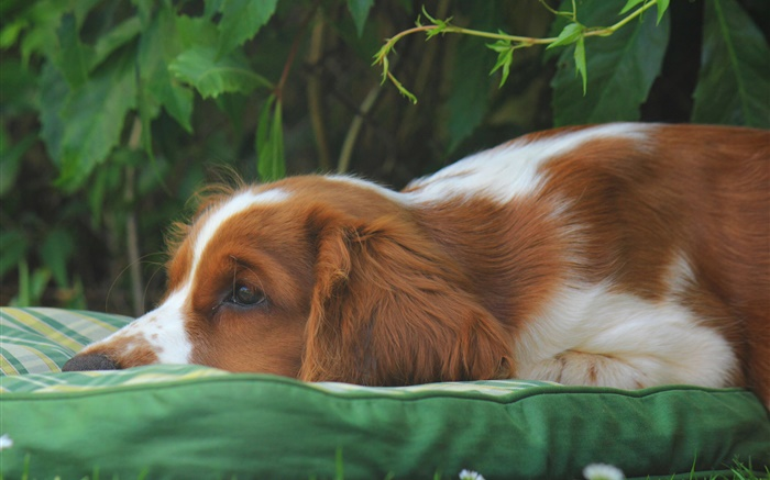 Sadness dog Wallpapers Pictures Photos Images