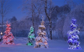 Snowy, lit trees, winter, Canada HD wallpaper