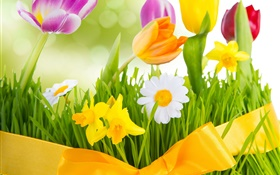 Spring, colorful flowers, tulips HD wallpaper