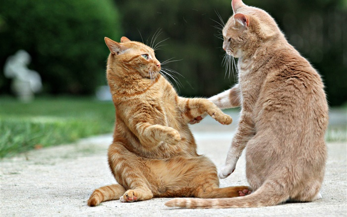 Two cats, face to face Wallpapers Pictures Photos Images