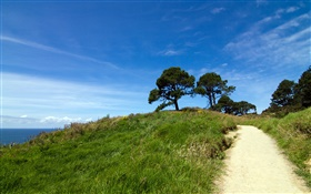 Verdant hill, trees, grass, Coromandel Peninsula, New Zealand HD wallpaper