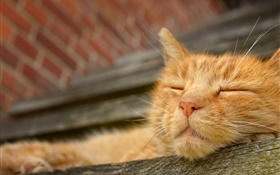 Cat sleep, face HD wallpaper
