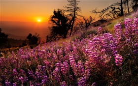 Colorful flowers, nature scenery, sunset, trees HD wallpaper