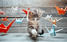 Cute kitten, colorful paper birds HD wallpaper