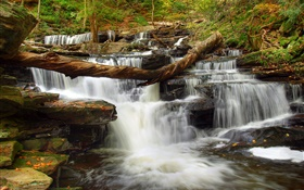 Forest, stones, river, stream, waterfall HD wallpaper