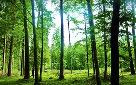 Nature scenery, summer, forest, trees, green, glare