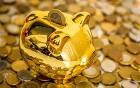 Piggy bank, pig, coins HD wallpaper