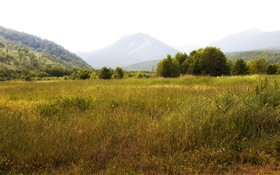 Russia, Kamchatka, mountains, trees, grass HD wallpaper