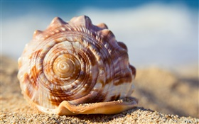 Shell, sands HD wallpaper