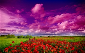 Sky, clouds, field, flowers, red poppies HD wallpaper