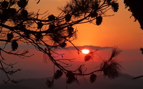 Sunset, tree, branch, cones, silhouette HD wallpaper