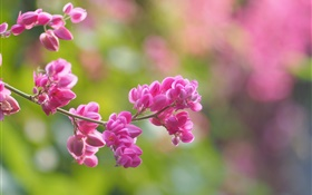 Twigs, pink flowers, bloom, blur HD wallpaper