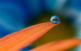 Water drops on flower petals HD wallpaper