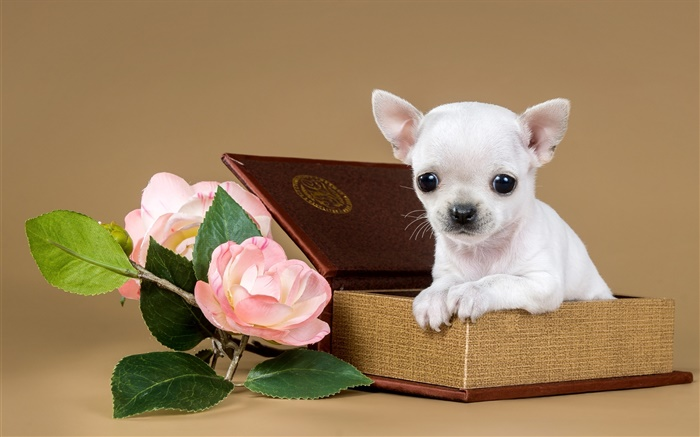 White puppy, flowers, box Wallpapers Pictures Photos Images