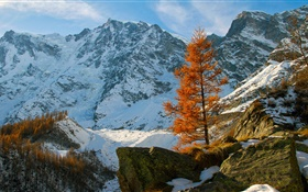 Winter, mountains, snow, trees, stones HD wallpaper