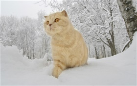 Winter, snow, cat HD wallpaper