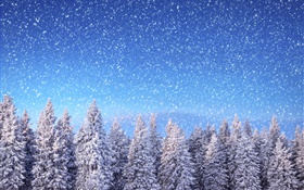 Winter, spruce trees, blue sky, snowflakes, snow HD wallpaper