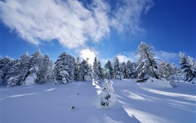 Winter, thick snow, trees, spruce, slope, clouds HD wallpaper
