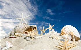 Beach, seashells, starfishes, blue sky HD wallpaper