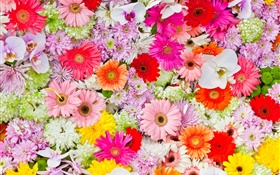 Chrysanthemums, orchids, gerbera, colorful flowers HD wallpaper