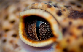 Crocodile eyes close-up, eyelid