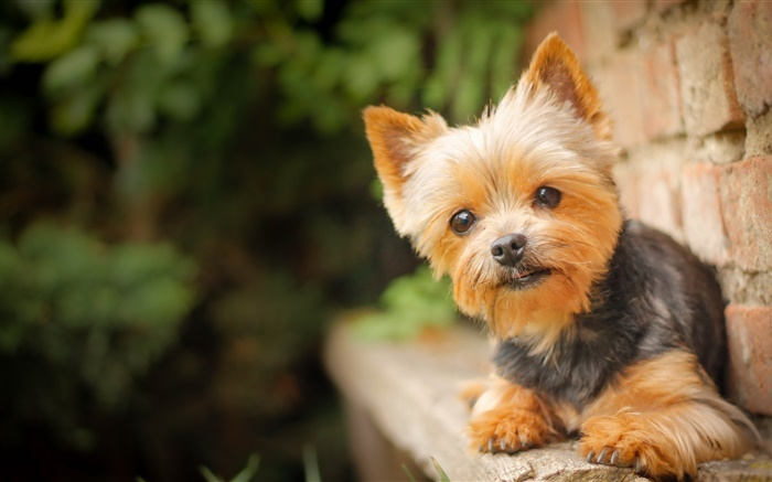 Cute pet, little dog Wallpapers Pictures Photos Images