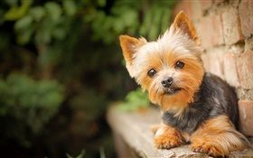 Cute pet, little dog HD wallpaper