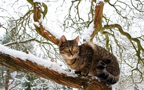 Domestic cat, tree, snow, winter HD wallpaper