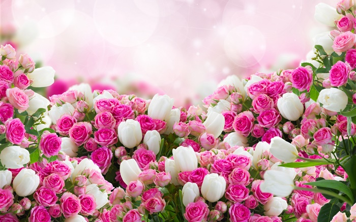Many rose flowers, pink and white Wallpapers Pictures Photos Images